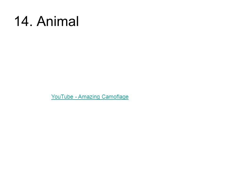 14. Animal YouTube - Amazing Camoflage