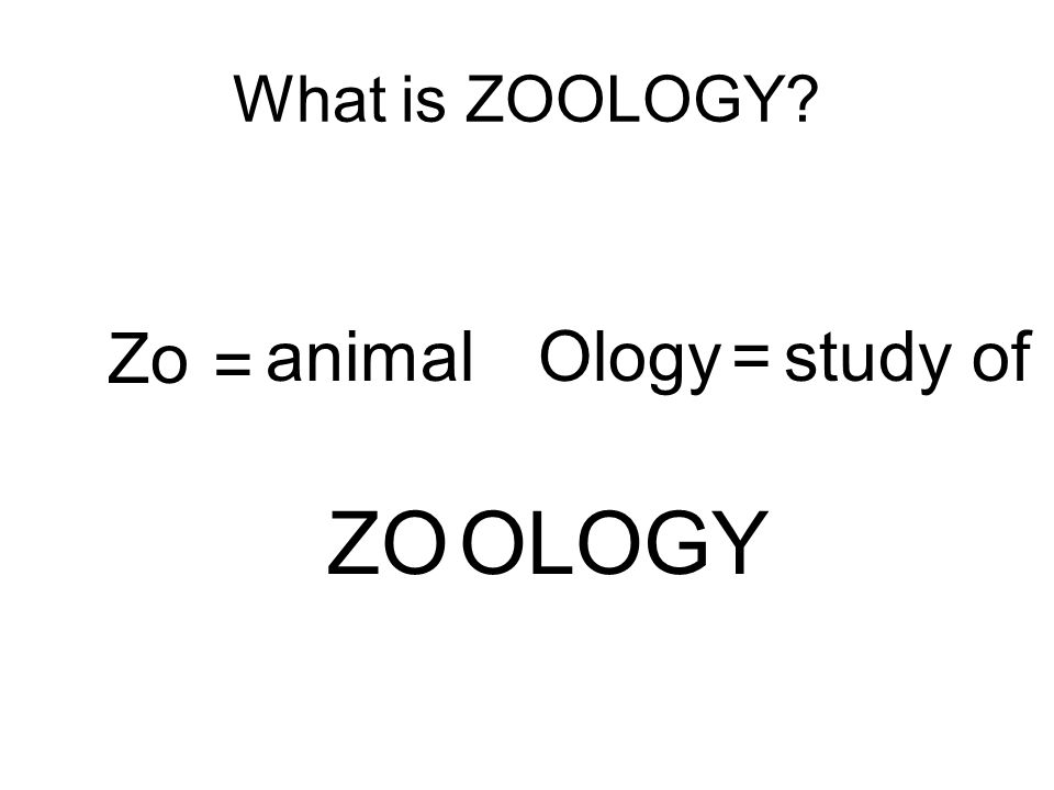 What is ZOOLOGY Zo animalOlogy=study of ZOOLOGY =