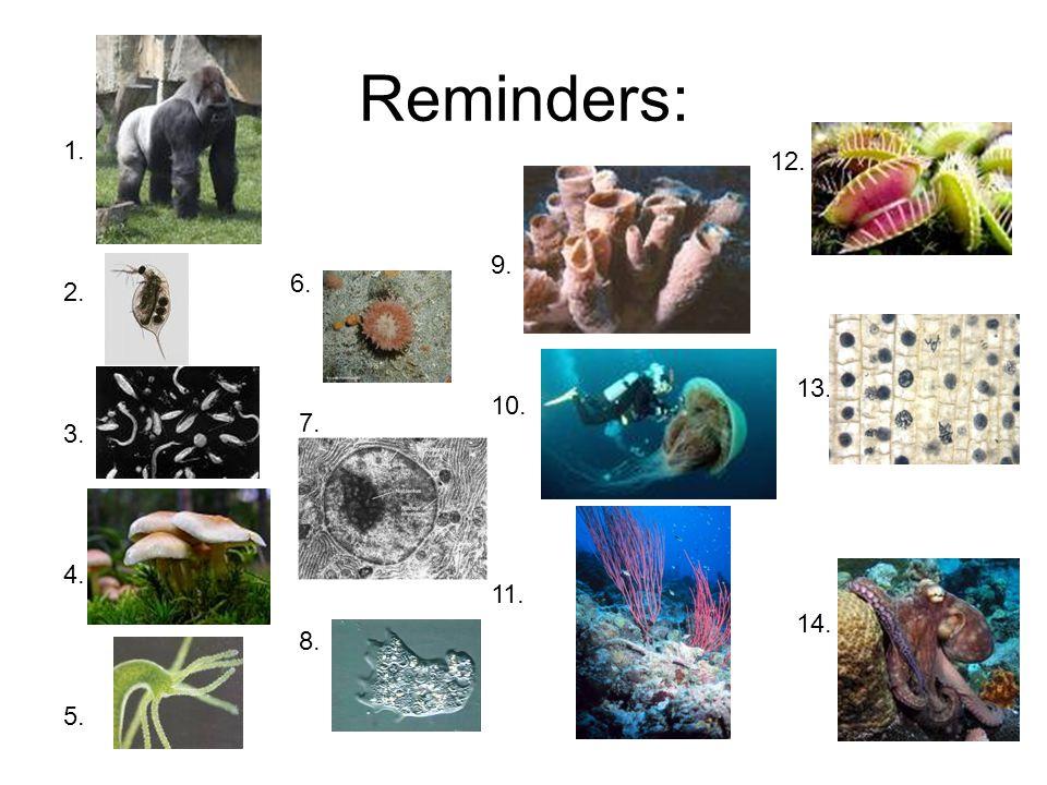 9. 10. 11. 1. 2. 3. 4. 5. Reminders: 13. 14. 12. 6. 7. 8.