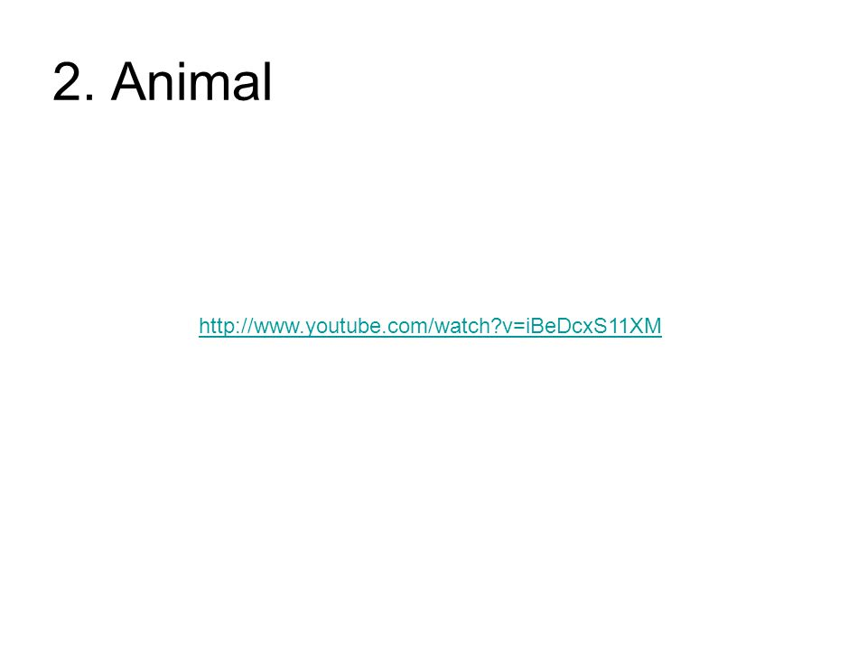 2. Animal http://www.youtube.com/watch v=iBeDcxS11XM
