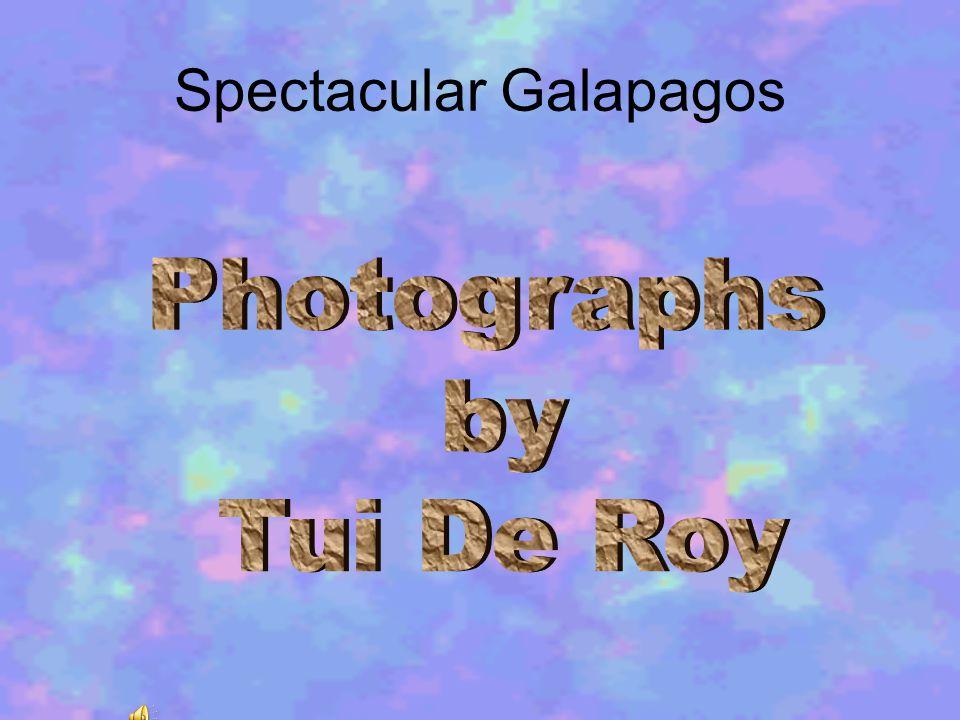 Spectacular Galapagos