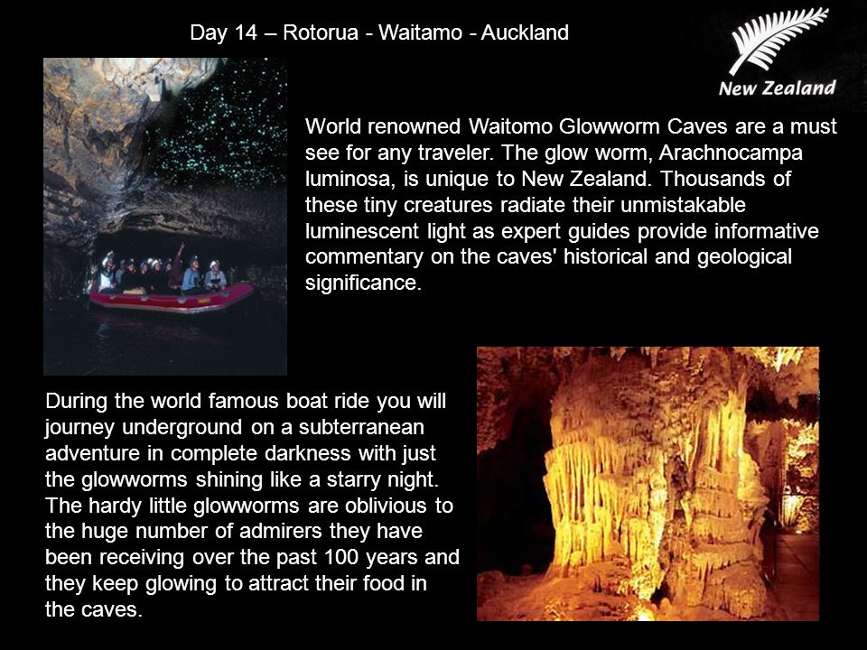 World renowned Waitomo Glowworm Caves are a must see for any traveler.