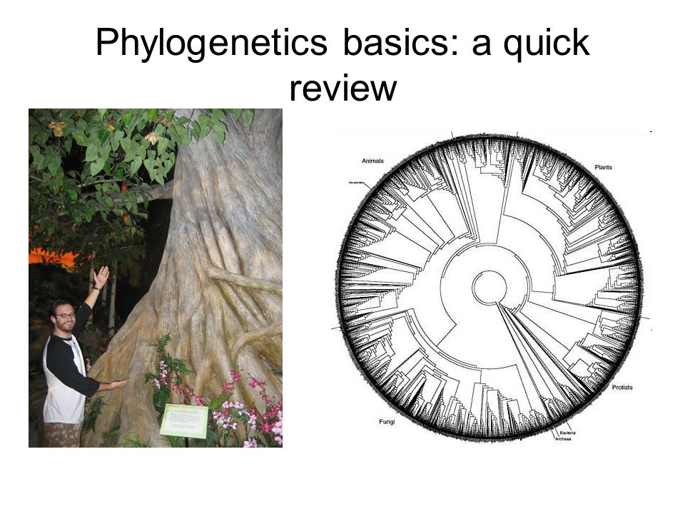 Phylogenetics basics: a quick review