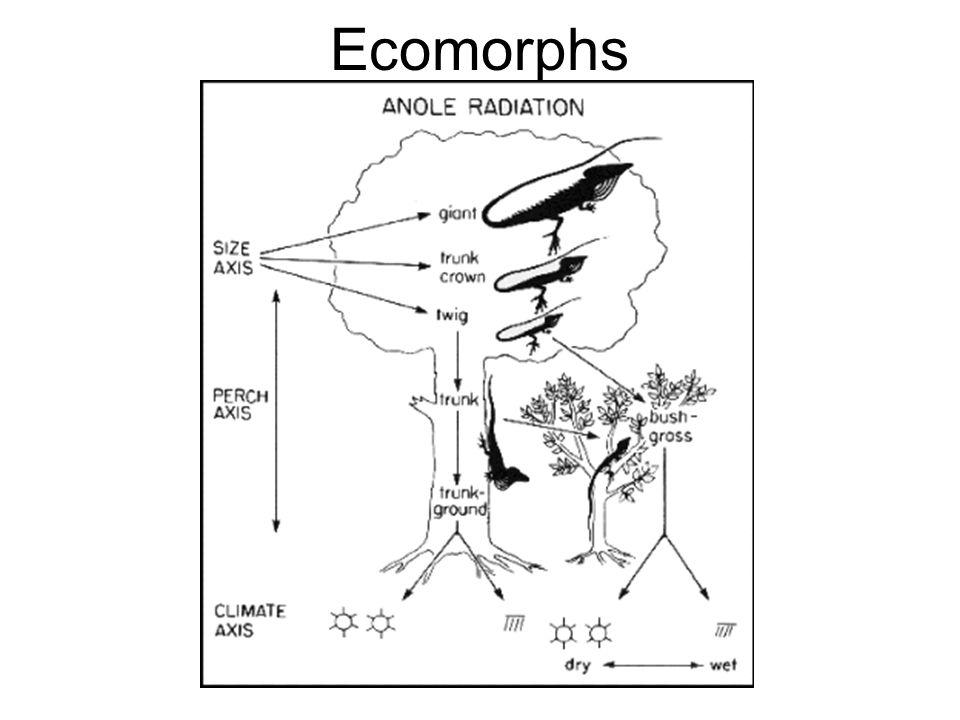 Ecomorphs