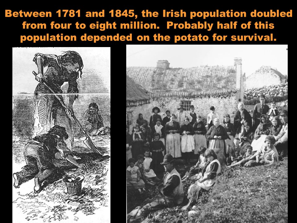 Between 1781 and 1845, the Irish population doubled from four to eight million. Probably half of this population depended on the potato for survival.