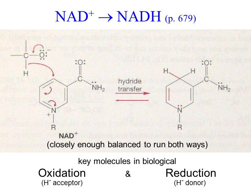 NAD +  NADH (p.