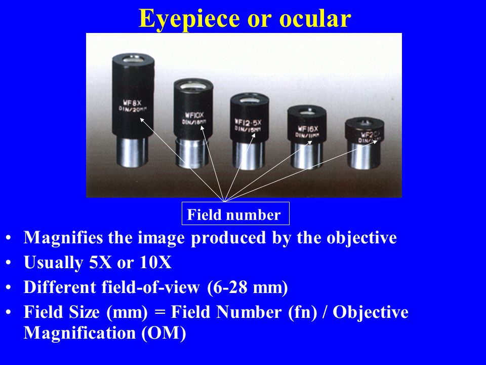 Eyepiece or ocular Magnifies the image produced by the objective Usually 5X or 10X Different field-of-view (6-28 mm) Field Size (mm) = Field Number (f