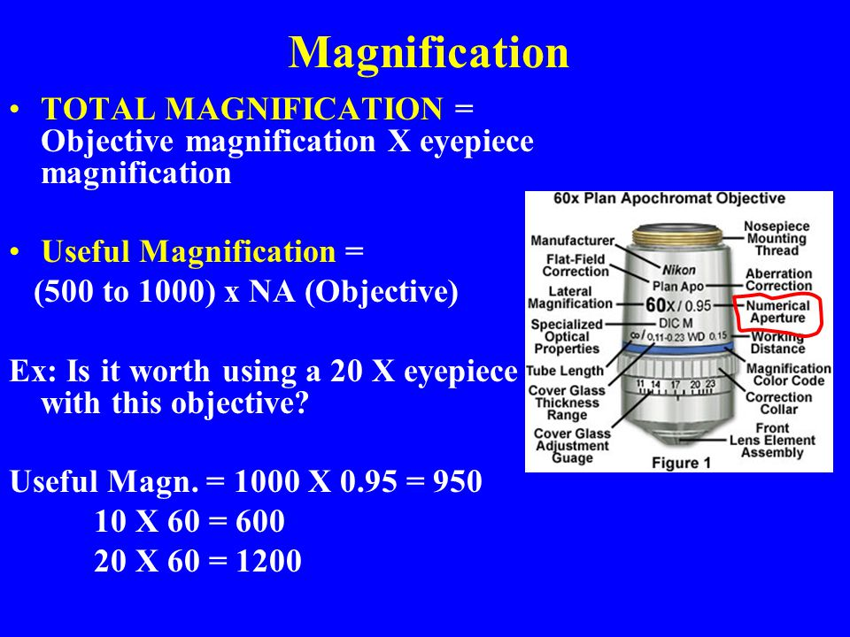 Magnification TOTAL MAGNIFICATION = Objective magnification X eyepiece magnification Useful Magnification = (500 to 1000) x NA (Objective) Ex: Is it w