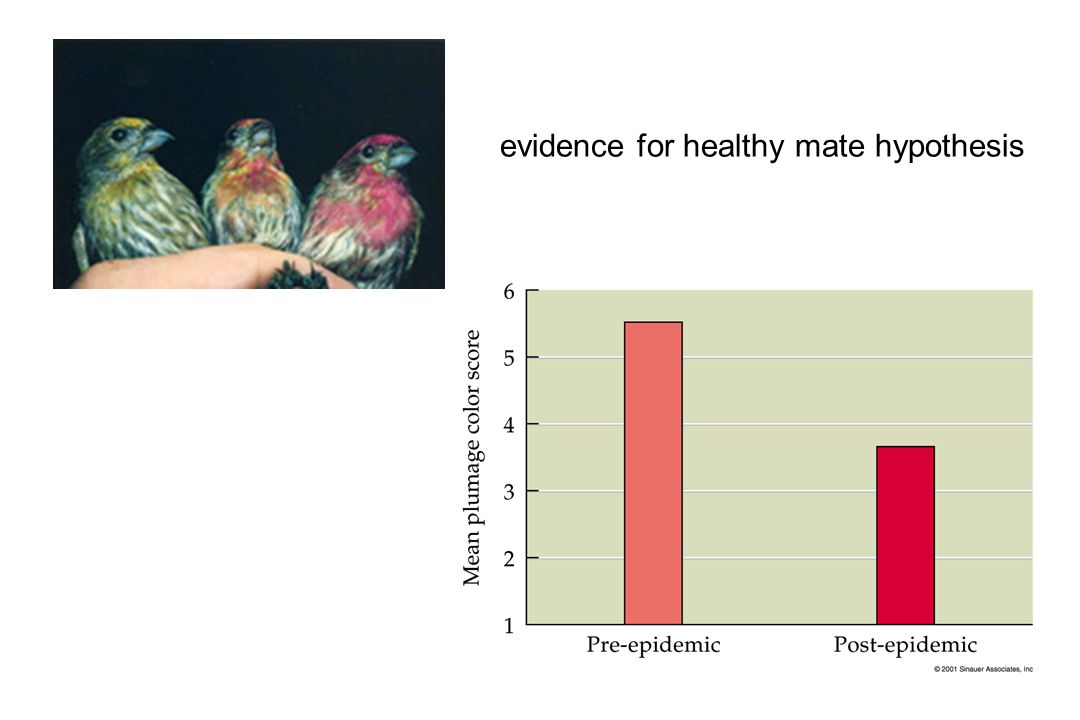evidence for healthy mate hypothesis