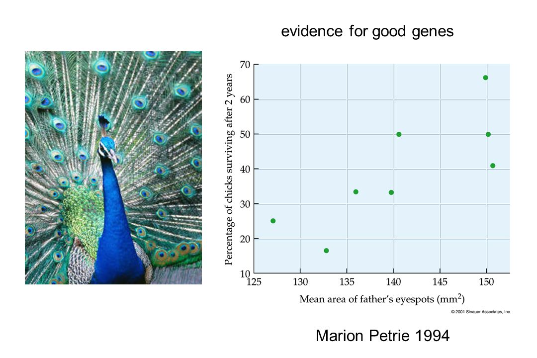 Marion Petrie 1994 evidence for good genes