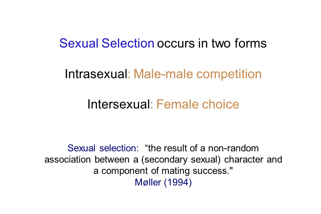 Sexual Selection occurs in two forms Intrasexual: Male-male competition Intersexual: Female choice Sexual selection: the result of a non-random association between a (secondary sexual) character and a component of mating success. Møller (1994)