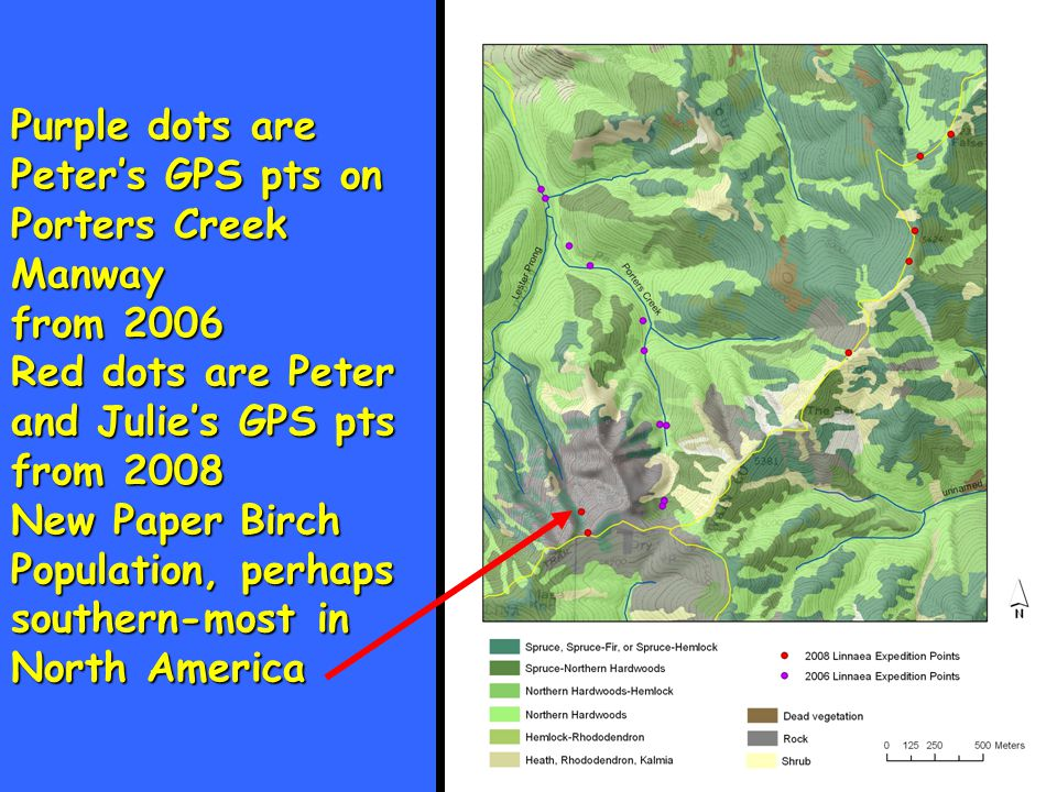 Purple dots are Peter's GPS pts on Porters Creek Manway from 2006 Red dots are Peter and Julie's GPS pts from 2008 New Paper Birch Population, perhaps southern-most in North America