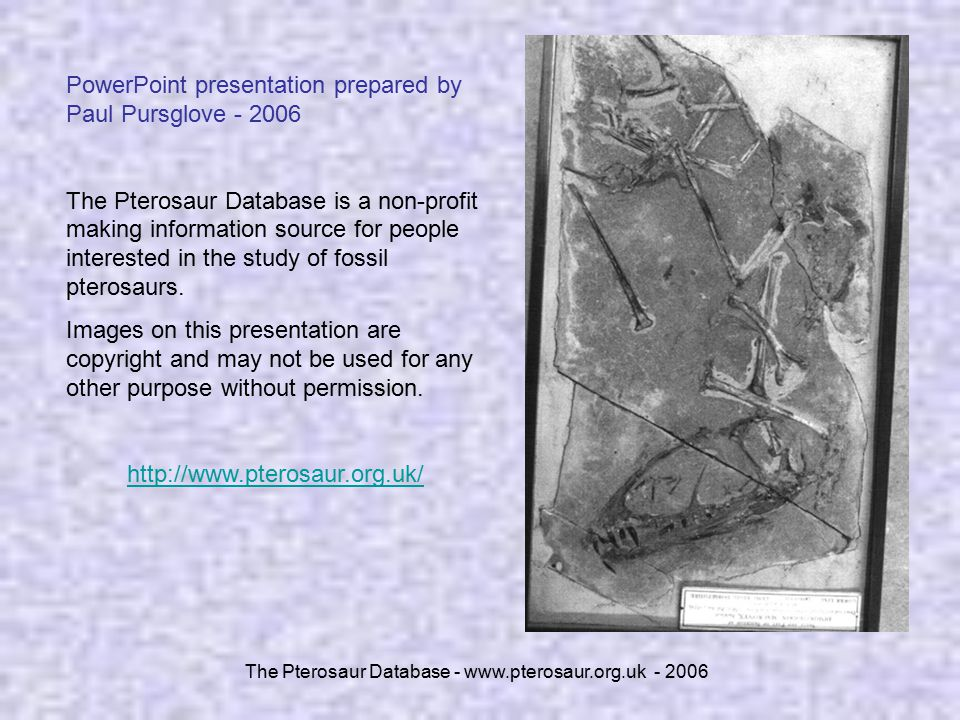 The Pterosaur Database - www.pterosaur.org.uk - 2006 PowerPoint presentation prepared by Paul Pursglove - 2006 The Pterosaur Database is a non-profit