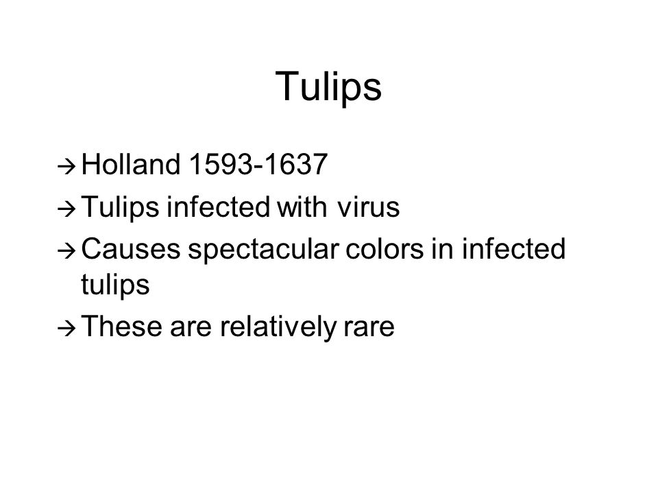Tulips  Holland 1593-1637  Tulips infected with virus  Causes spectacular colors in infected tulips  These are relatively rare