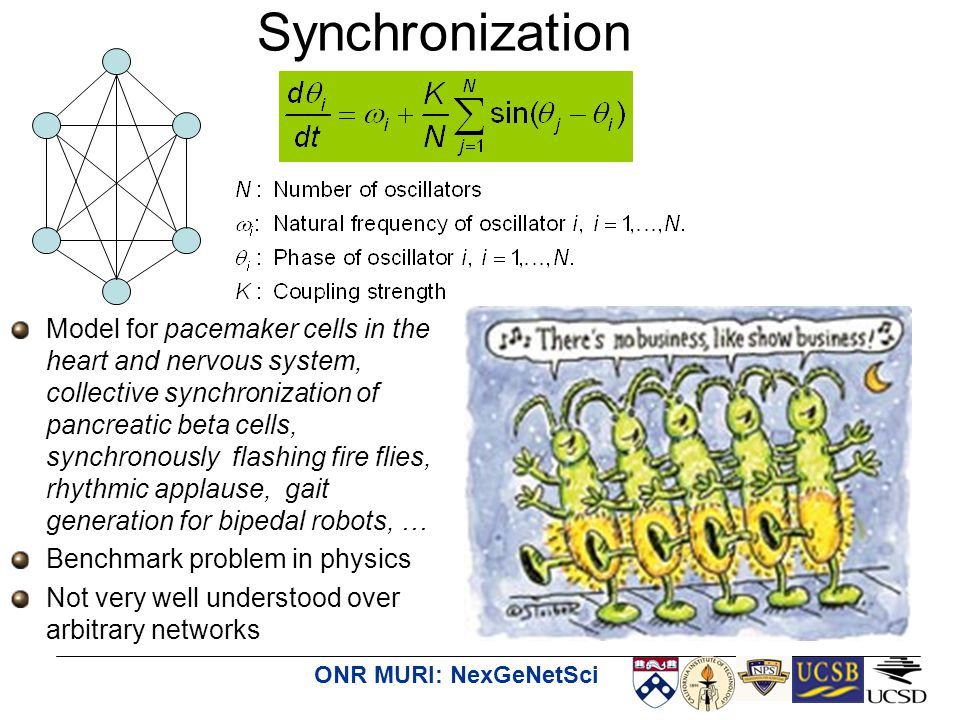 ONR MURI: NexGeNetSci Synchronization Model for pacemaker cells in the heart and nervous system, collective synchronization of pancreatic beta cells, synchronously flashing fire flies, rhythmic applause, gait generation for bipedal robots, … Benchmark problem in physics Not very well understood over arbitrary networks