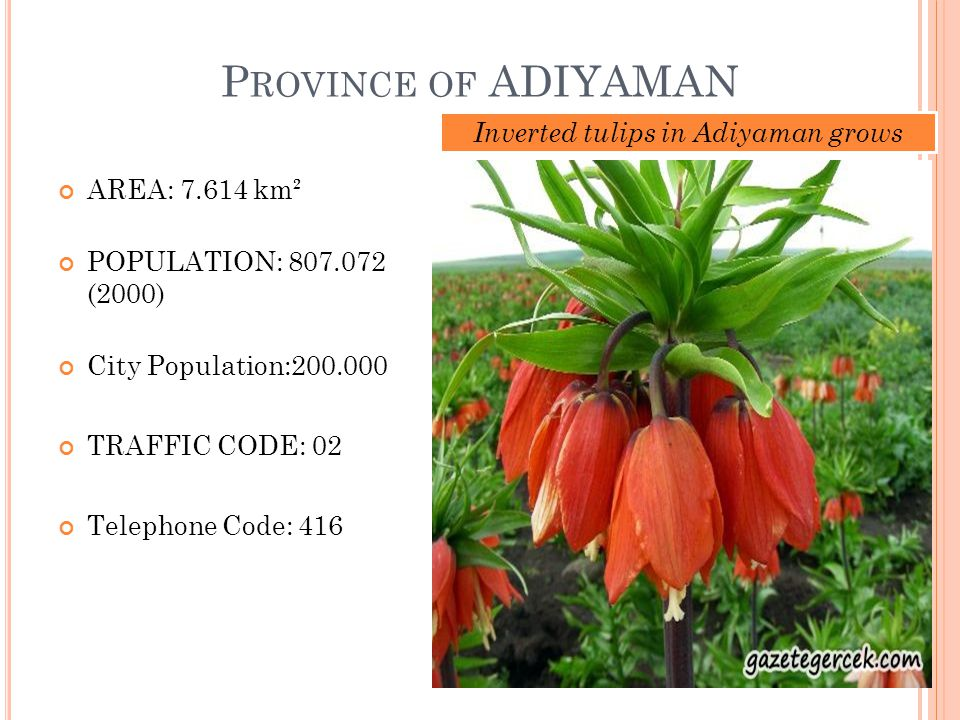 P ROVINCE OF ADIYAMAN AREA: 7.614 km² POPULATION: 807.072 (2000) City Population:200.000 TRAFFIC CODE: 02 Telephone Code: 416 Inverted tulips in Adiyaman grows