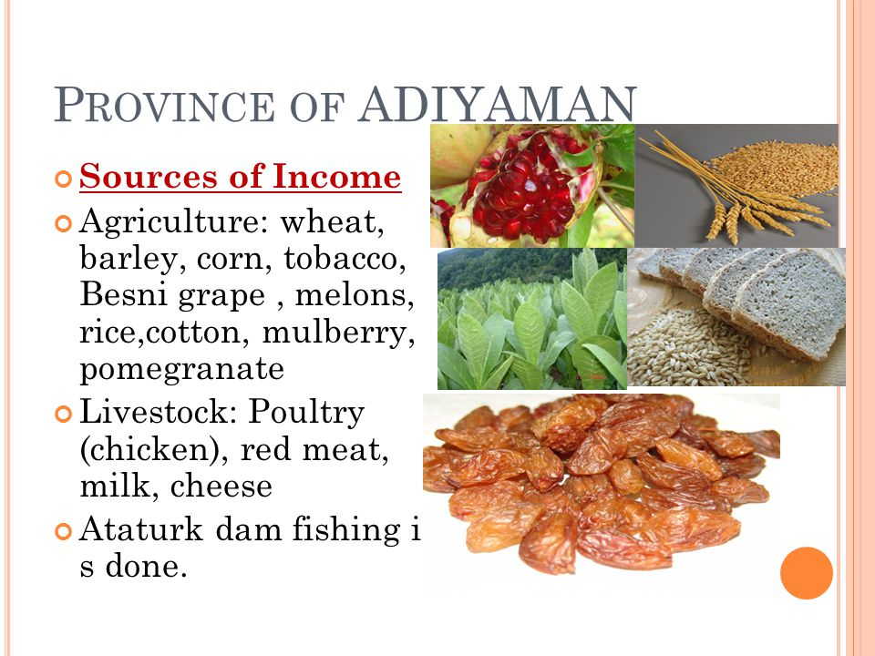 P ROVINCE OF ADIYAMAN Sources of Income Agriculture: wheat, barley, corn, tobacco, Besni grape, melons, rice,cotton, mulberry, pomegranate Livestock: Poultry (chicken), red meat, milk, cheese Ataturk dam fishing i s done.
