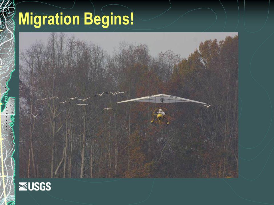 Migration Begins!