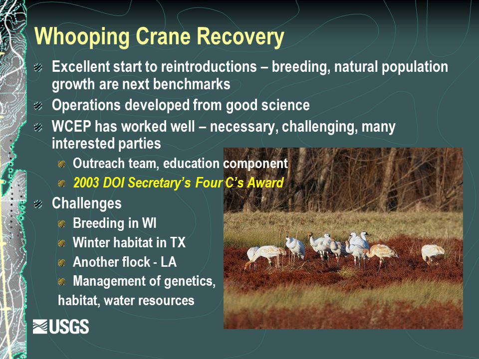 Whooping Crane Recovery Excellent start to reintroductions – breeding, natural population growth are next benchmarks Operations developed from good sc