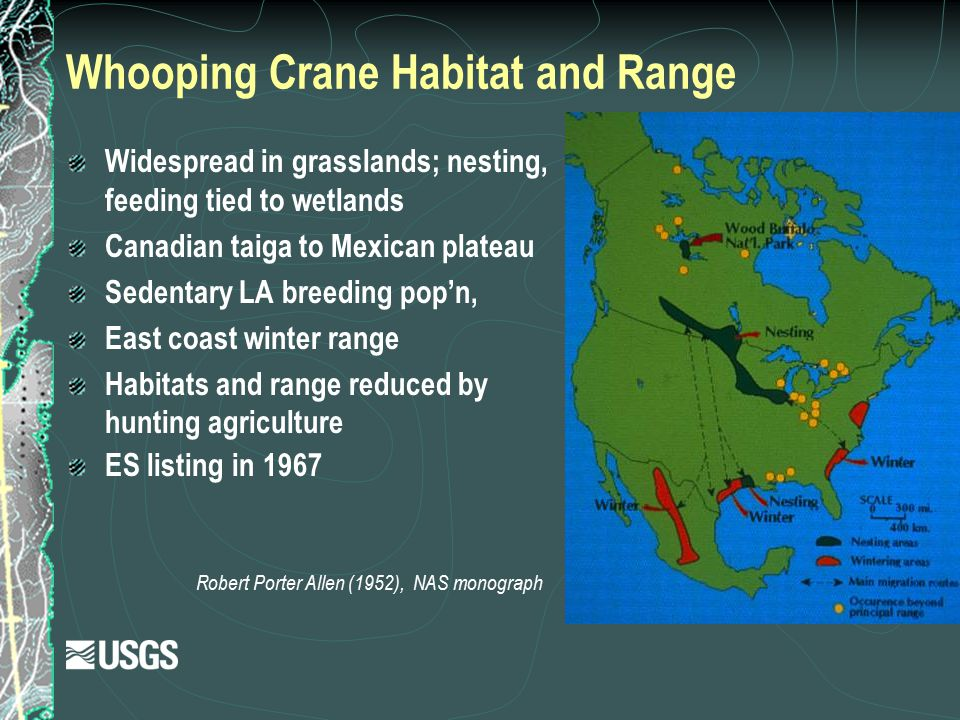 Whooping Crane Habitat and Range Robert Porter Allen (1952), NAS monograph Widespread in grasslands; nesting, feeding tied to wetlands Canadian taiga