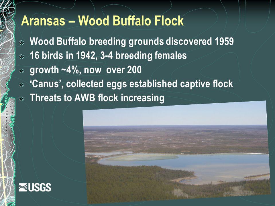 Aransas – Wood Buffalo Flock Wood Buffalo breeding grounds discovered 1959 16 birds in 1942, 3-4 breeding females growth ~4%, now over 200 'Canus', co