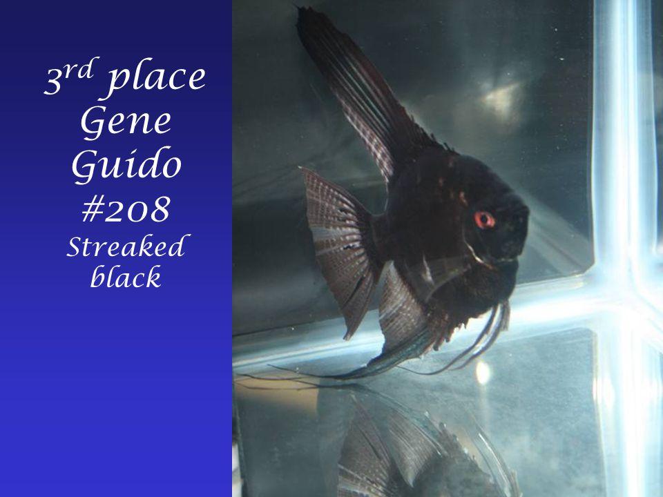 3 rd place Gene Guido #208 Streaked black