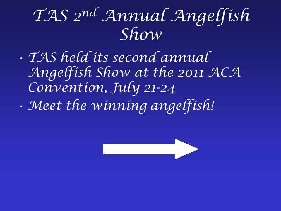 TAS 2 nd Annual Angelfish Show TAS held its second annual Angelfish Show at the 2011 ACA Convention, July 21-24 Meet the winning angelfish!