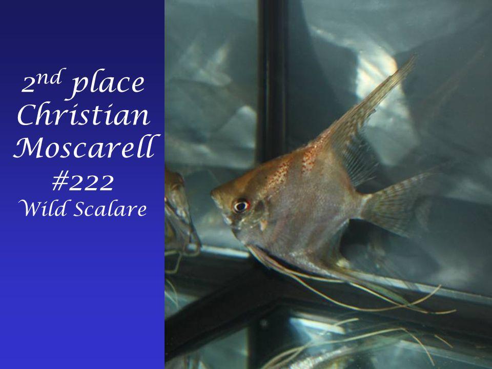 1 st place Frank Cowherd #201 Wild Scalare