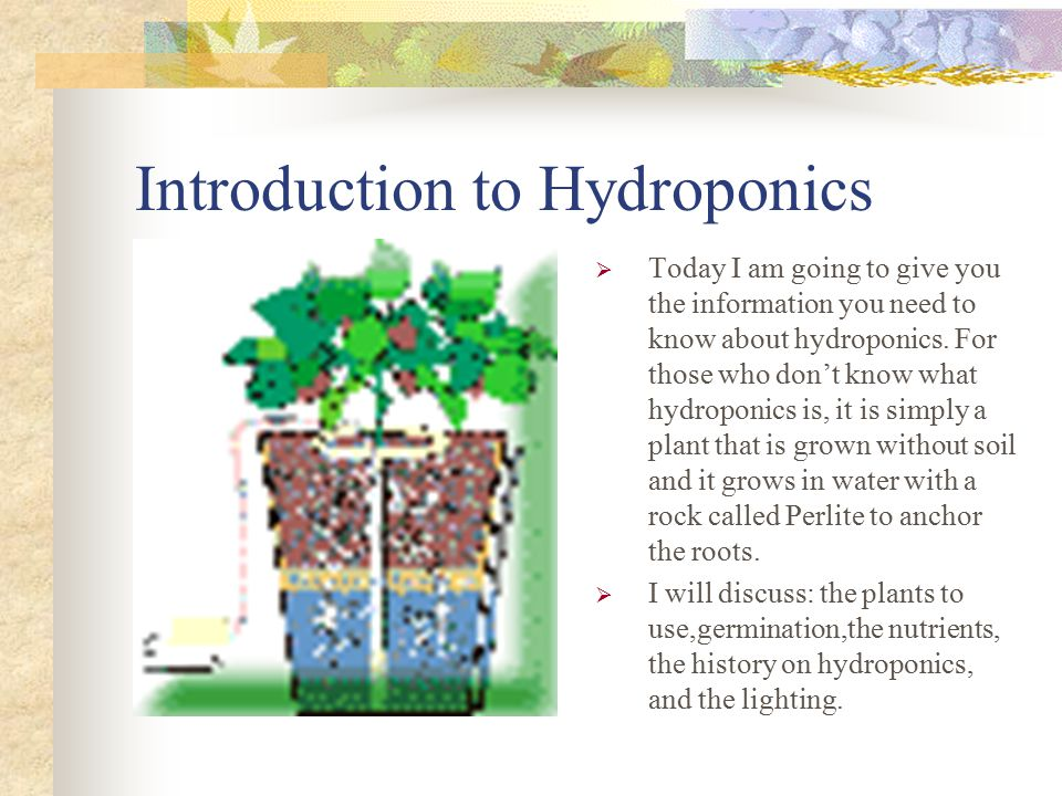 Introduction to Hydroponics  Today I am going to give you the information you need to know about hydroponics.