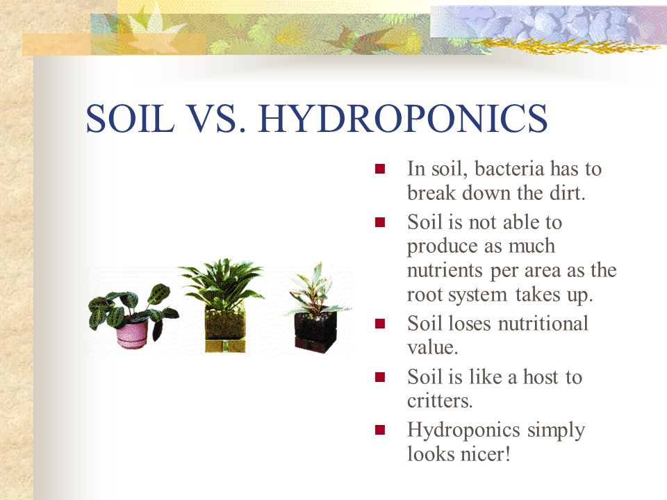 SOIL VS. HYDROPONICS In soil, bacteria has to break down the dirt.