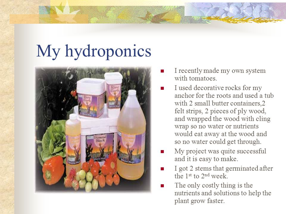 Hydroponics history The growing of hydroponics plants is water was described in Egyptian writings dating back several hundred years before Christ.
