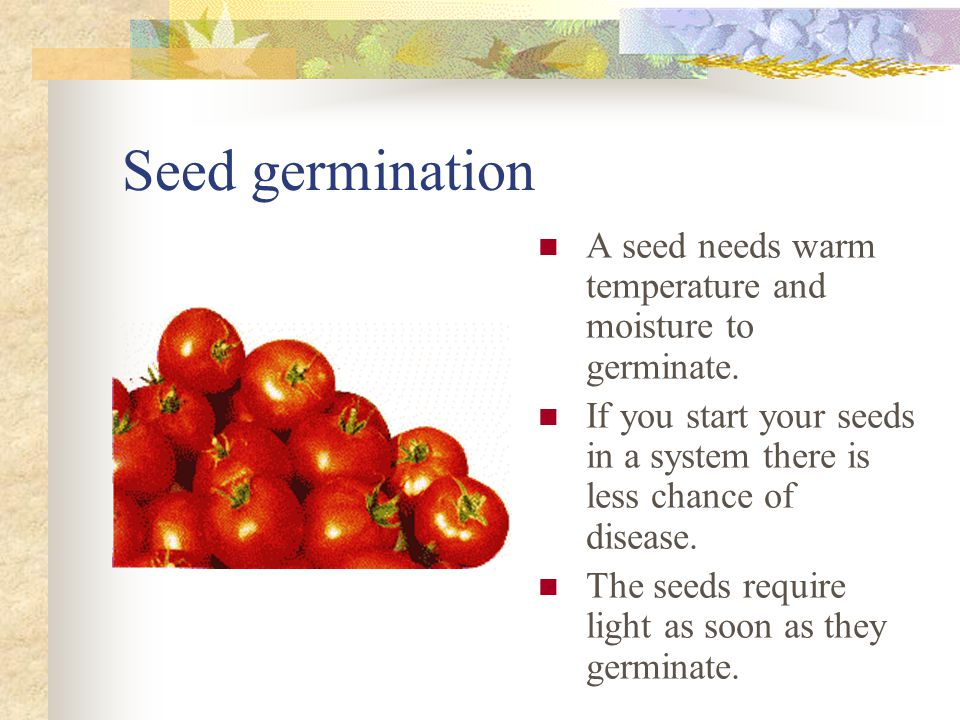 Seed germination A seed needs warm temperature and moisture to germinate.