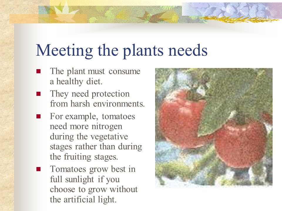 Meeting the plants needs The plant must consume a healthy diet.