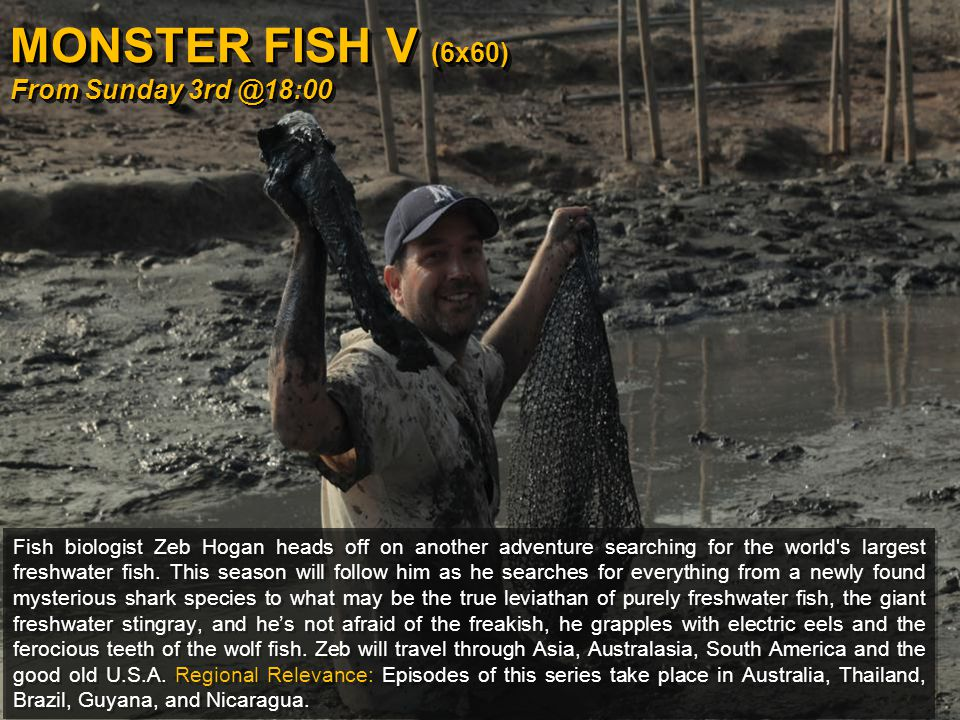 MONSTER FISH V (6x60) From Sunday 3rd @18:00 Fish biologist Zeb Hogan heads off on another adventure searching for the world s largest freshwater fish.