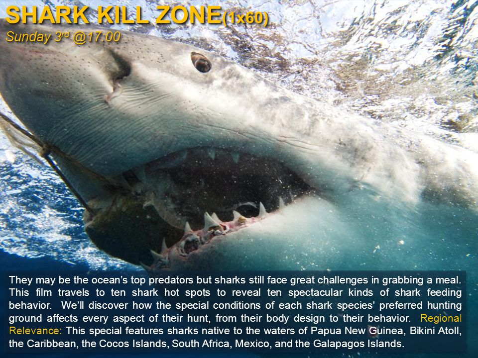 SHARK KILL ZONE (1x60) Sunday 3 rd @17:00 They may be the ocean's top predators but sharks still face great challenges in grabbing a meal.