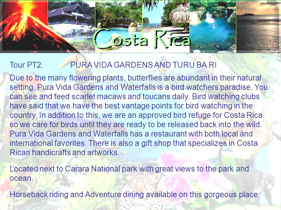 Tour PT2. PURA VIDA GARDENS AND TURU BA RI Due to the many flowering plants, butterflies are abundant in their natural setting. Pura Vida Gardens and