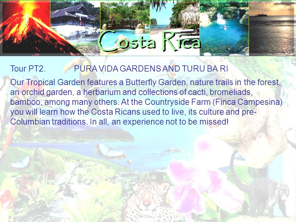 Tour PT2. PURA VIDA GARDENS AND TURU BA RI Our Tropical Garden features a Butterfly Garden, nature trails in the forest, an orchid garden, a herbarium