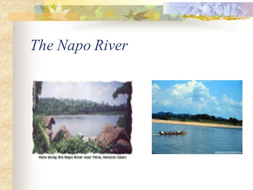 Cultural background The Napo River Ecuador The Amazon River Andes
