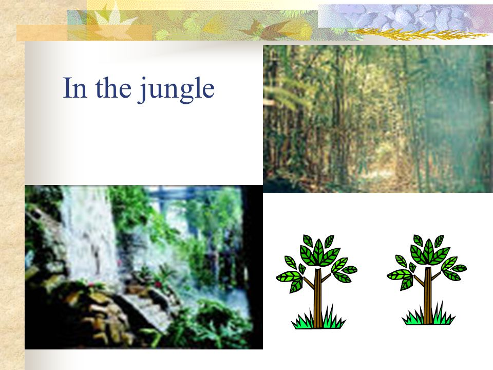 jungle In the jungle