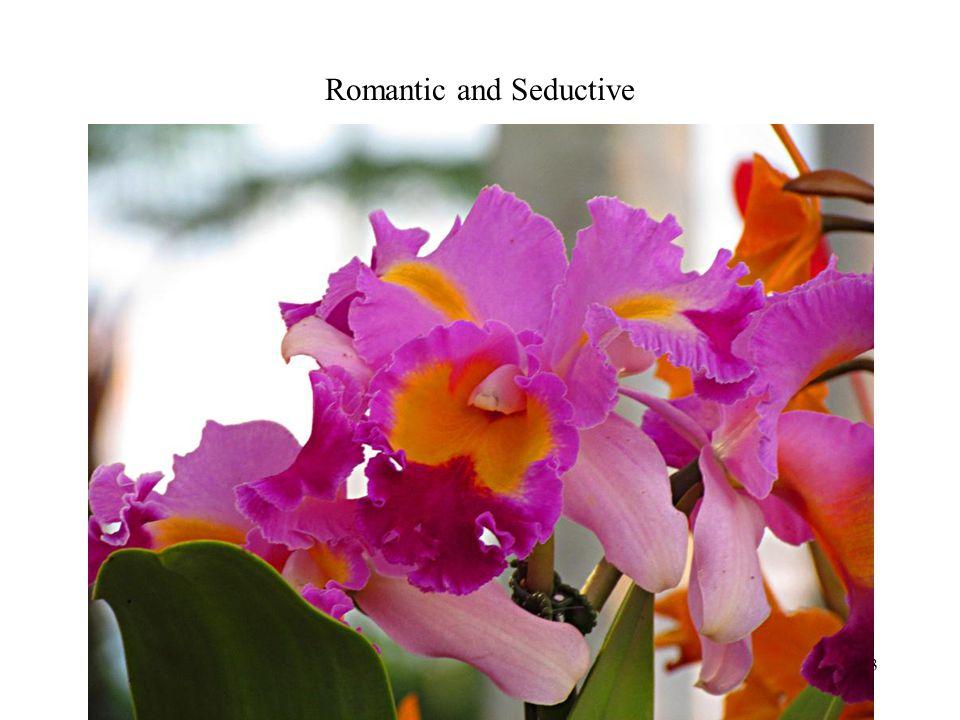 Romantic and Seductive Photography 13