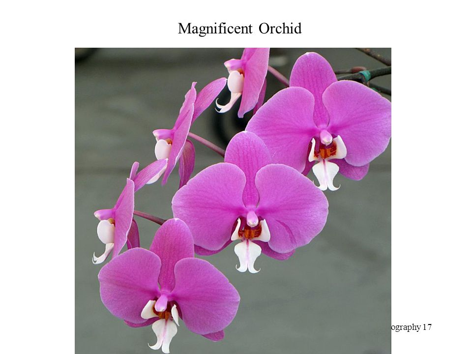 Magnificent Orchid Photography 17
