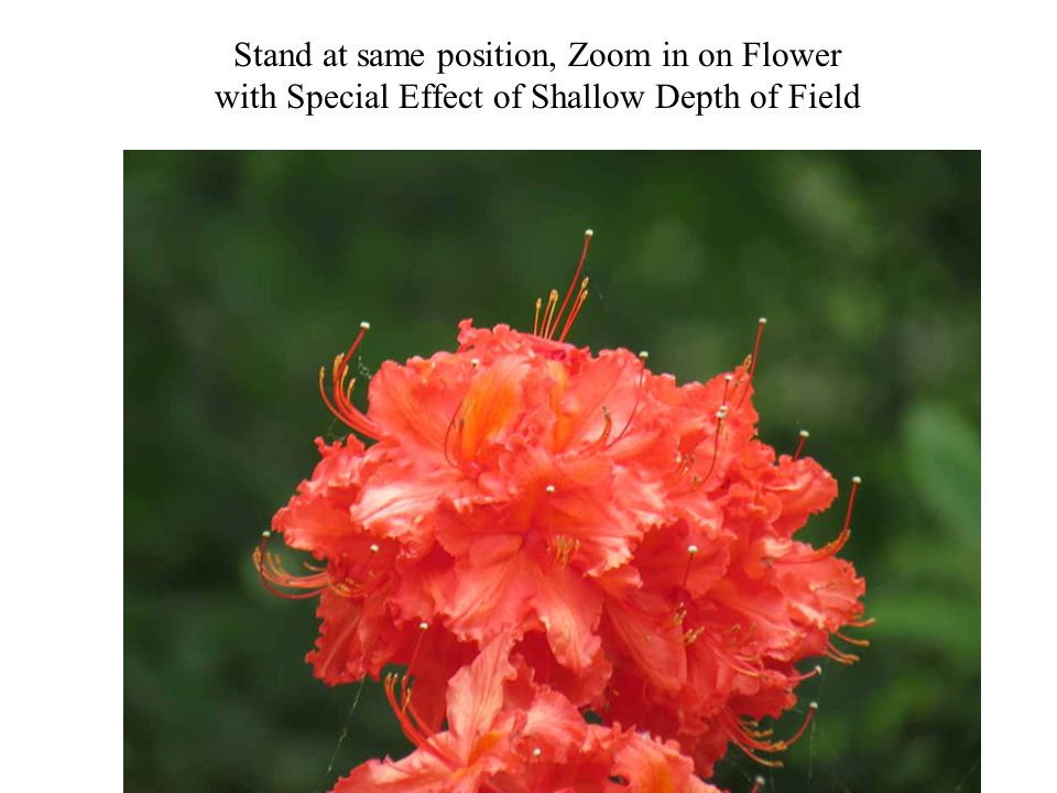 Stand at same position, Zoom in on Flower with Special Effect of Shallow Depth of Field Photography 22