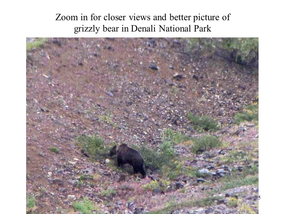 Zoom in for closer views and better picture of grizzly bear in Denali National Park Photography 55
