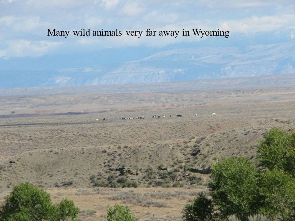 GPS 64 Many wild animals very far away in Wyoming