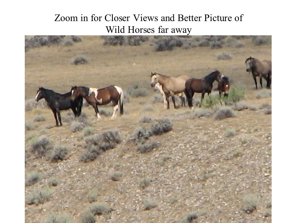 Zoom in for Closer Views and Better Picture of Wild Horses far away Photography 65