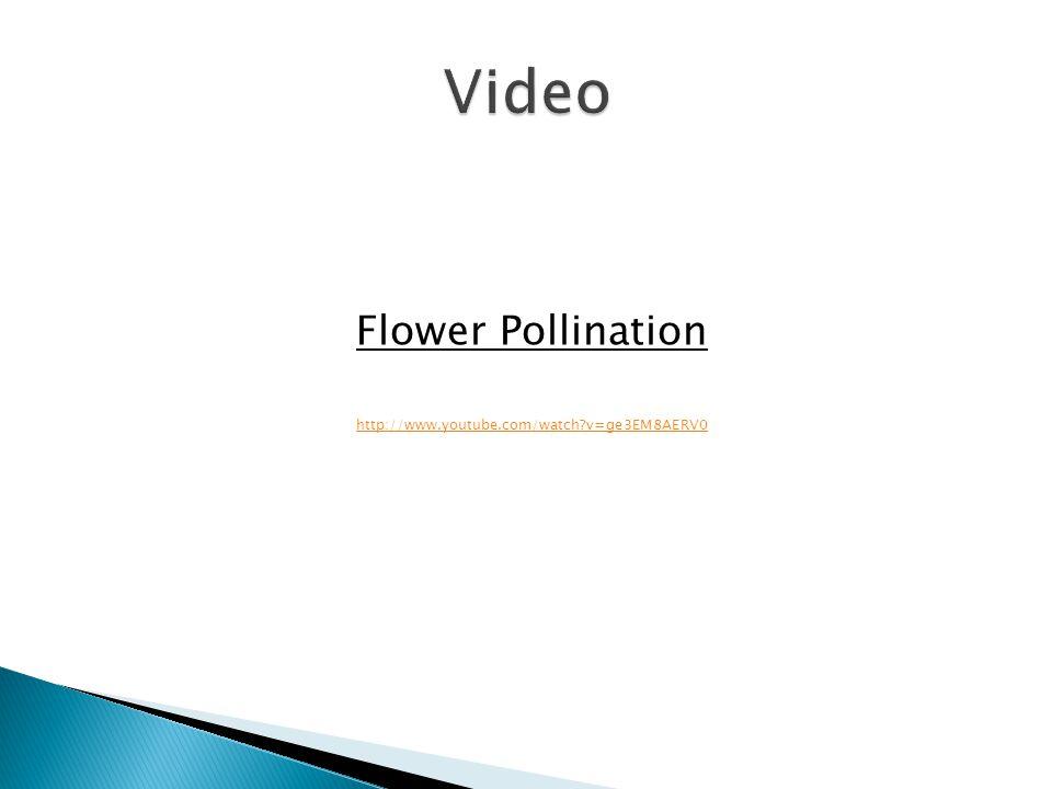Flower Pollination http://www.youtube.com/watch v=ge3EM8AERV0