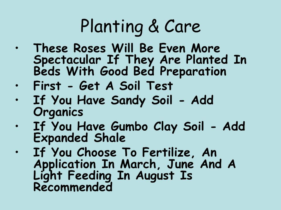 Planting & Care These Roses Will Be Even More Spectacular If They Are Planted In Beds With Good Bed Preparation First - Get A Soil Test If You Have Sandy Soil - Add Organics If You Have Gumbo Clay Soil - Add Expanded Shale If You Choose To Fertilize, An Application In March, June And A Light Feeding In August Is Recommended
