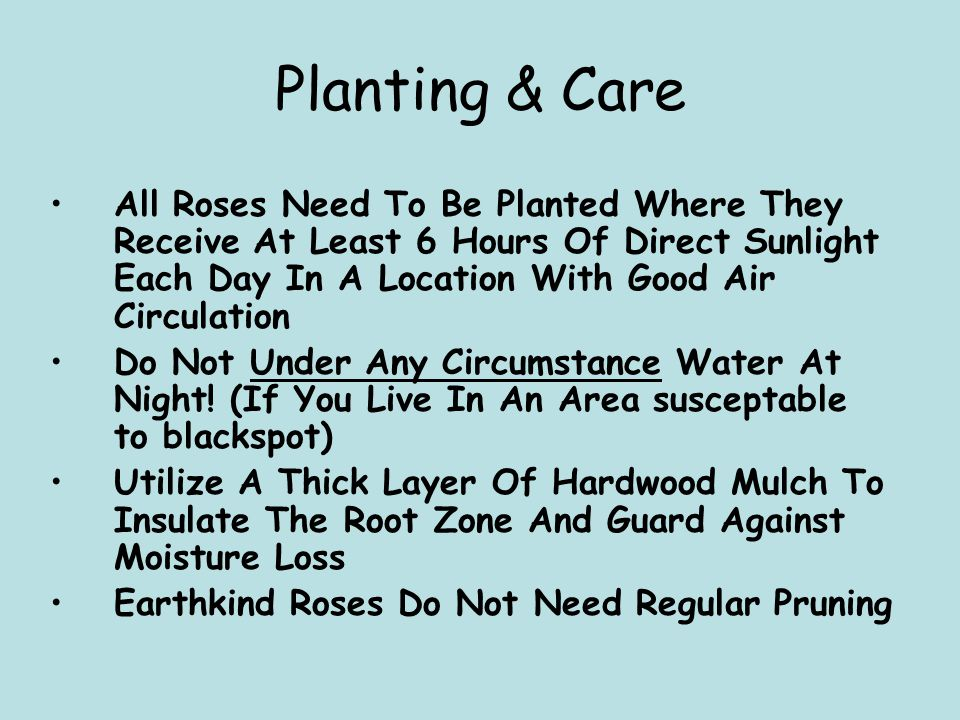 Planting & Care All Roses Need To Be Planted Where They Receive At Least 6 Hours Of Direct Sunlight Each Day In A Location With Good Air Circulation D
