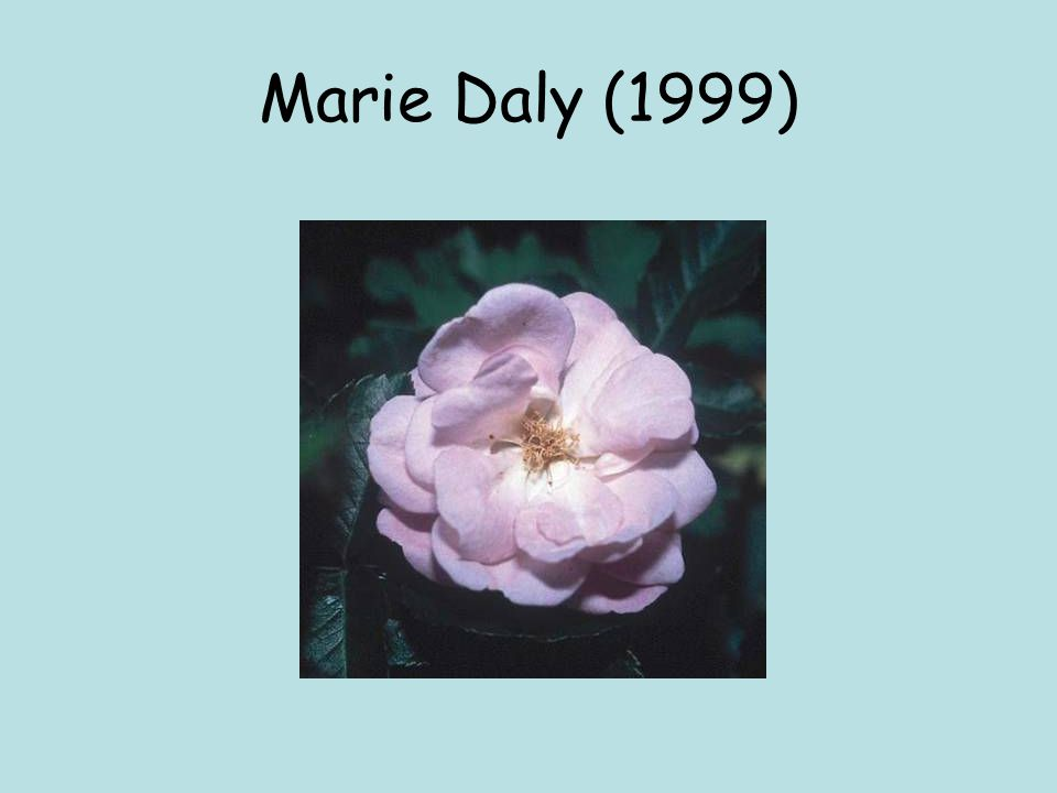 Marie Daly (1999)