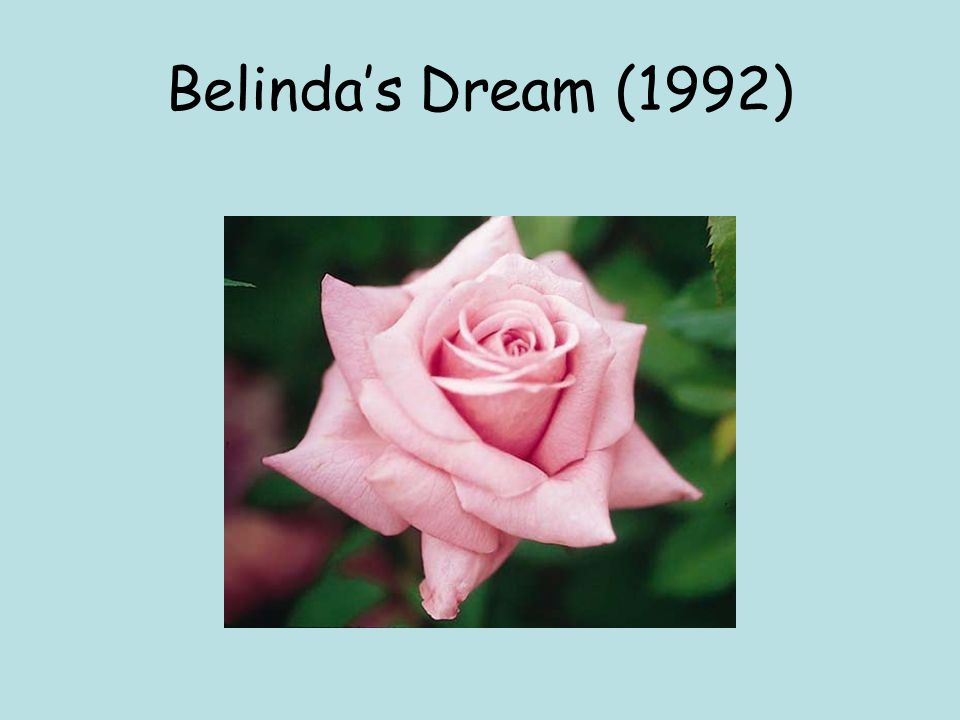 Belinda's Dream (1992)